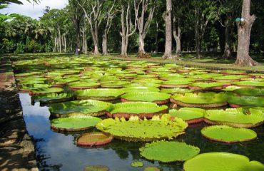 ssr botanical garden
