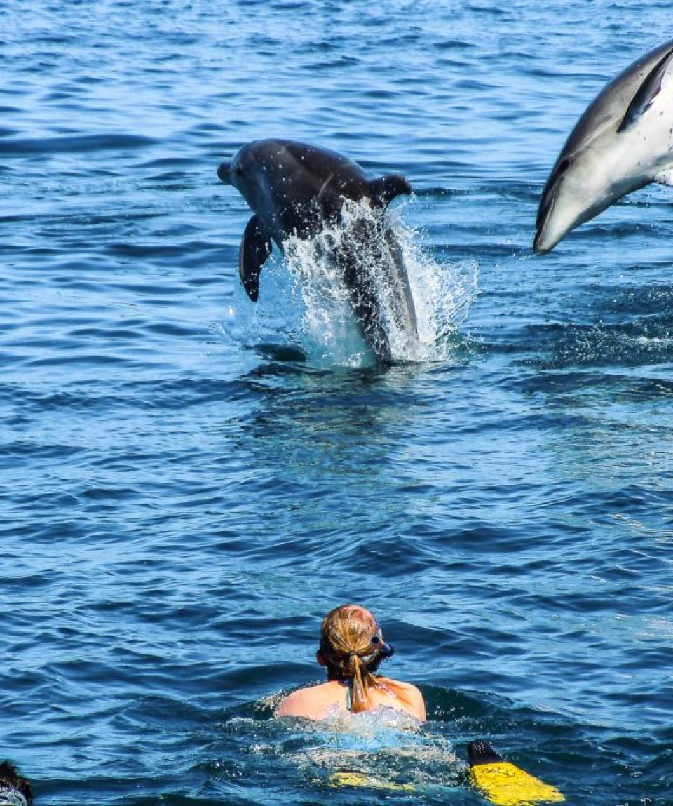 swim-with_dolphin